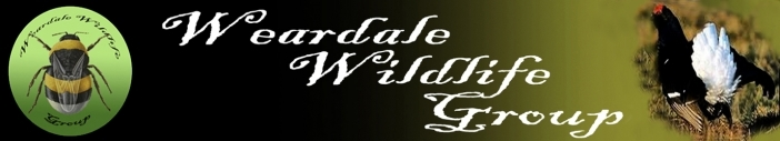 www.weardalewildlifegroup.co.uk Logo
